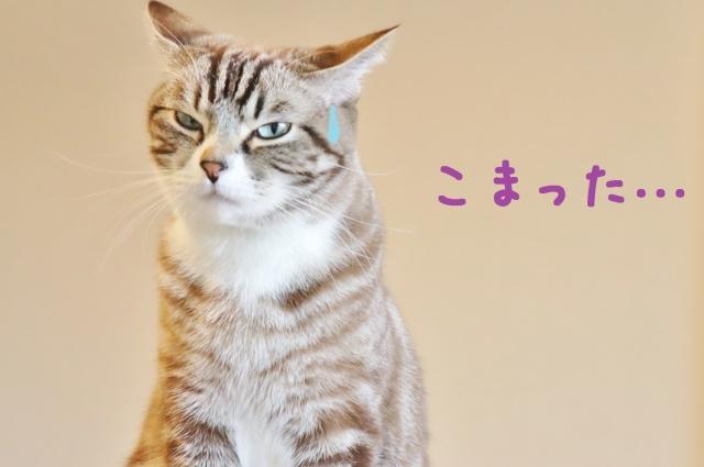 f:id:yuro0822:20210411204957j:plain