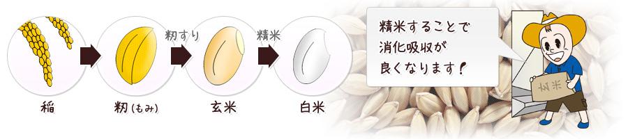 f:id:yuru-fit:20210109210138j:plain