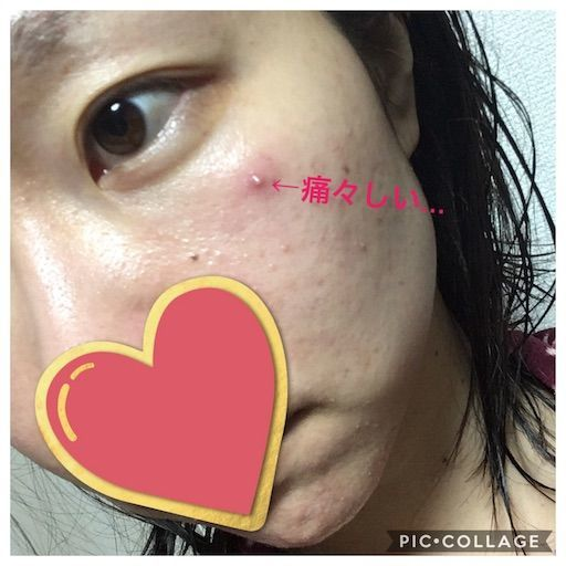 f:id:yurufuwa-nyanko:20190113221539j:image