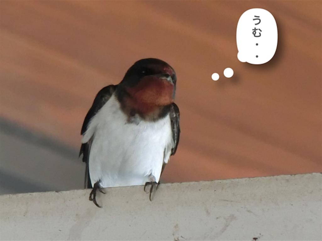 f:id:yurukeirider:20180413015043p:image