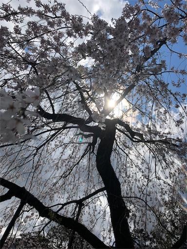 f:id:yurulife50:20190402183825j:image