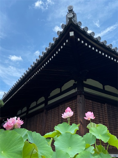 f:id:yurulife50:20201010092537j:image