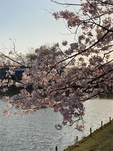 f:id:yurulife50:20210318235917j:image