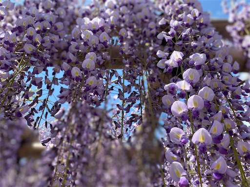f:id:yurulife50:20210619000455j:image