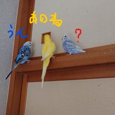 f:id:yurumamatan:20181209201212j:plain