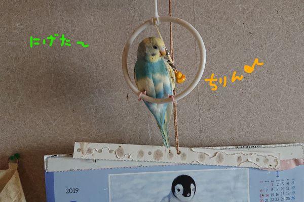 f:id:yurumamatan:20190220225124j:plain