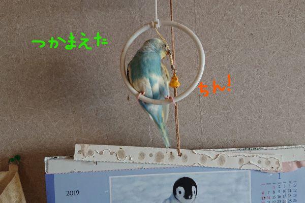 f:id:yurumamatan:20190220225212j:plain