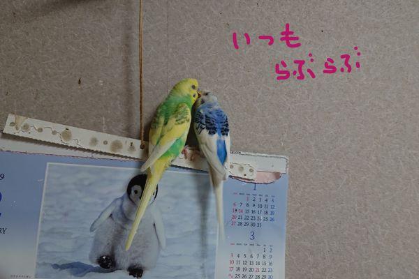 f:id:yurumamatan:20190220231710j:plain