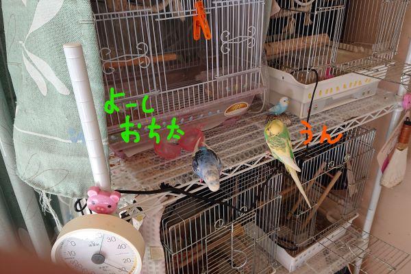 f:id:yurumamatan:20190225222851j:plain