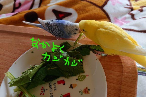 f:id:yurumamatan:20190301214053j:plain