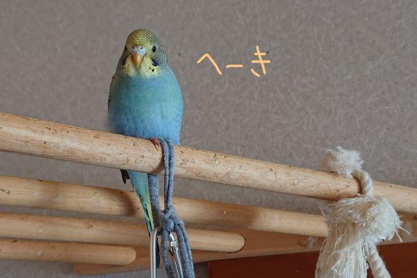 f:id:yurumamatan:20190416161907j:plain