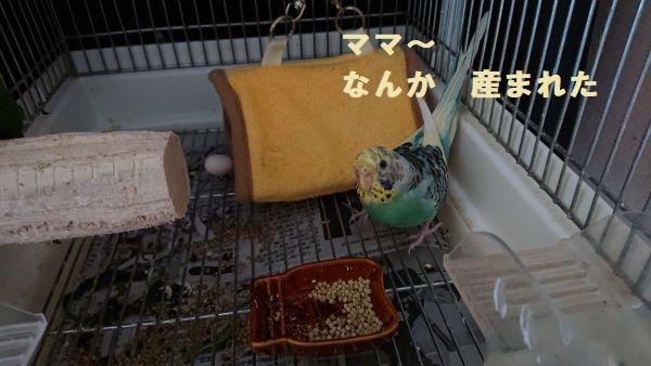 f:id:yurumamatan:20190516221232j:plain