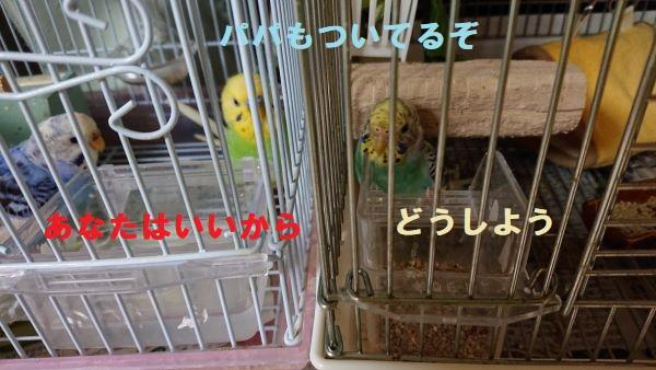 f:id:yurumamatan:20190516221333j:plain