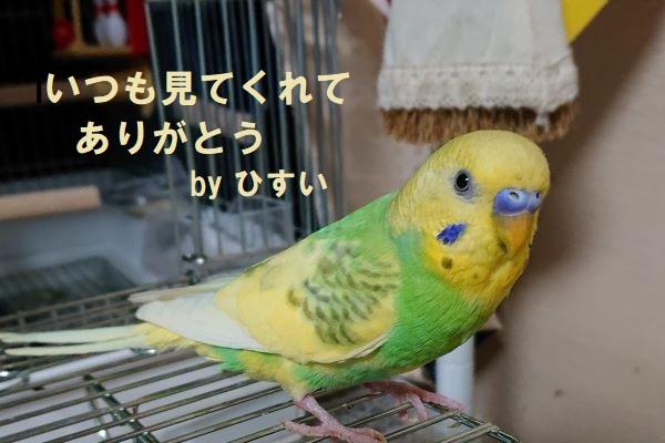 f:id:yurumamatan:20190601181400j:plain