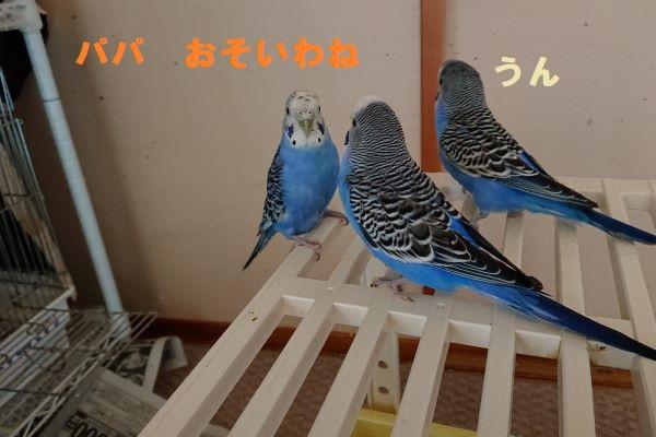 f:id:yurumamatan:20190604232550j:plain