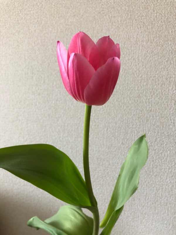 f:id:yurumani:20200404224029j:plain