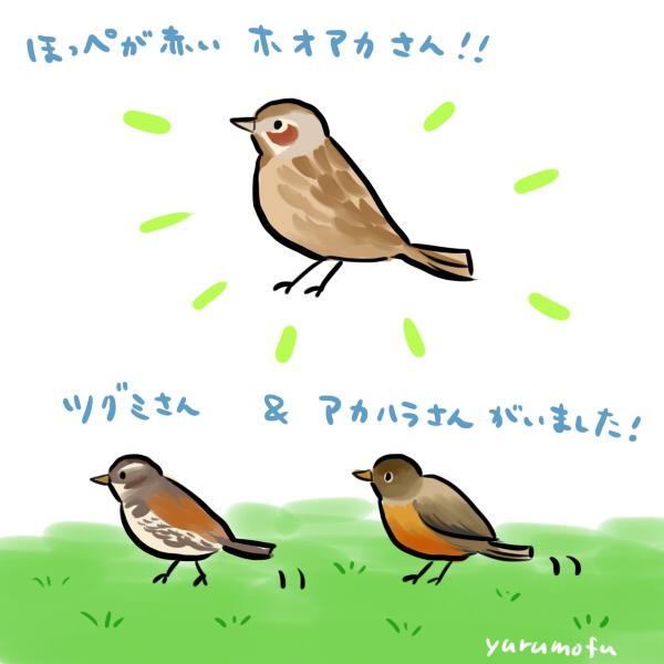 f:id:yurumofu:20160203215526j:plain