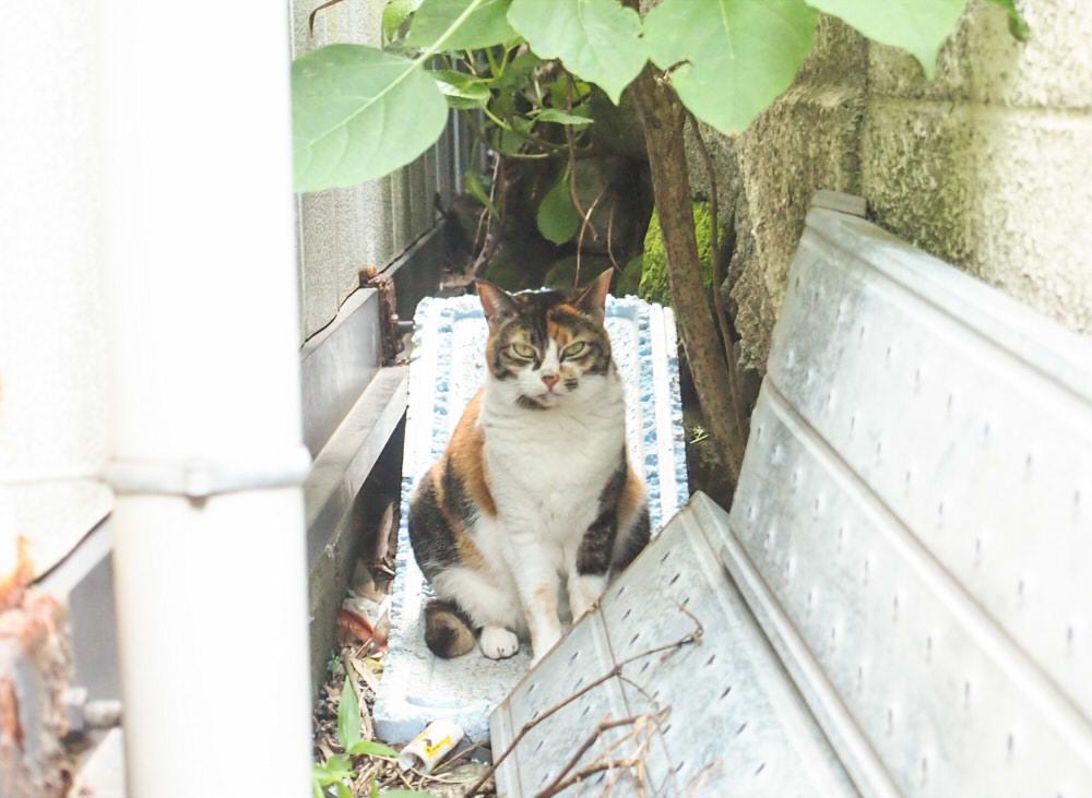f:id:yurumofu:20160518105035j:plain