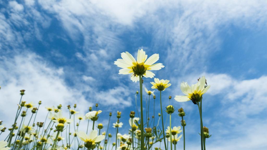 白い花と青空