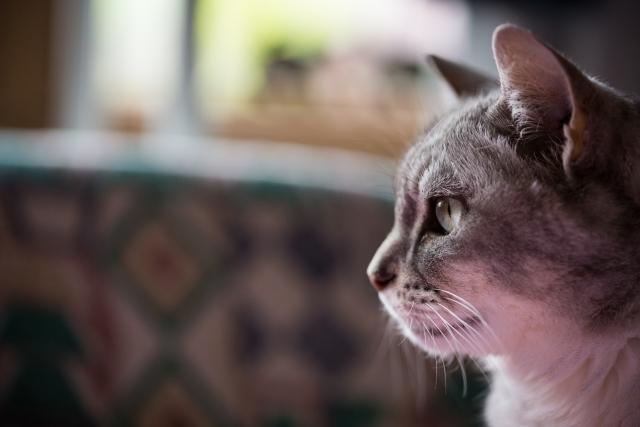 癒される猫の横顔