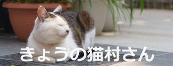 f:id:yururimaaruku:20160528115537p:plain
