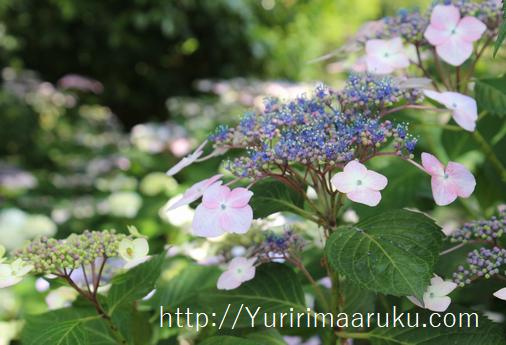 f:id:yururimaaruku:20160605140613p:plain