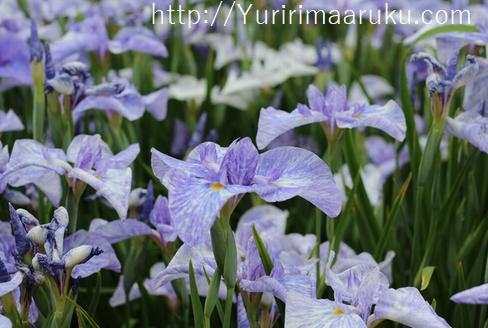 f:id:yururimaaruku:20160605141213p:plain