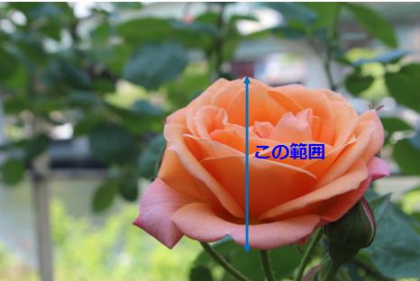 f:id:yururimaaruku:20160910095743p:plain