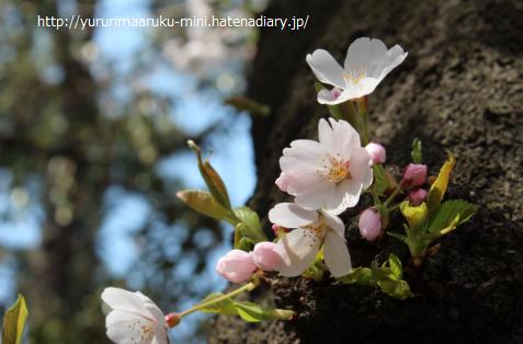 f:id:yururimaaruku:20170401205103p:plain