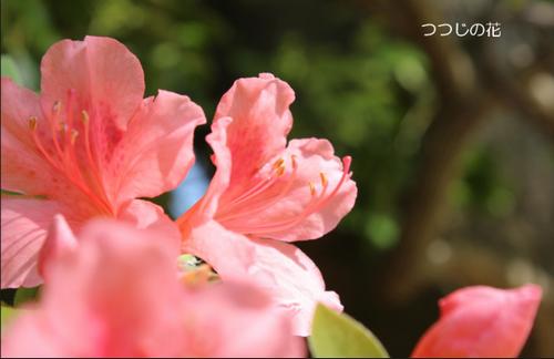 f:id:yururimaaruku:20170503073107p:plain