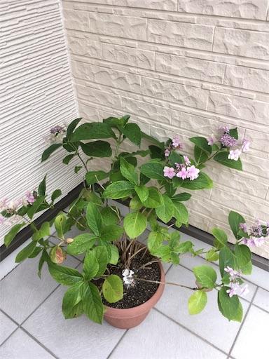 f:id:yururimaaruku:20170625133811j:image