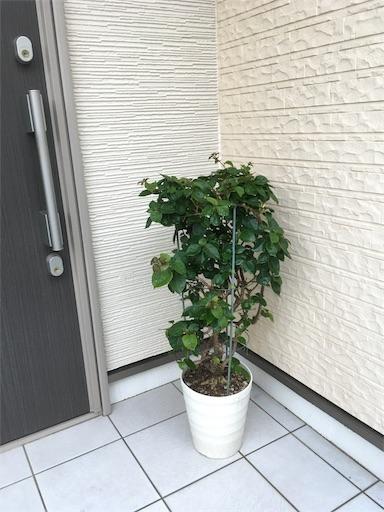 f:id:yururimaaruku:20170704072914j:image