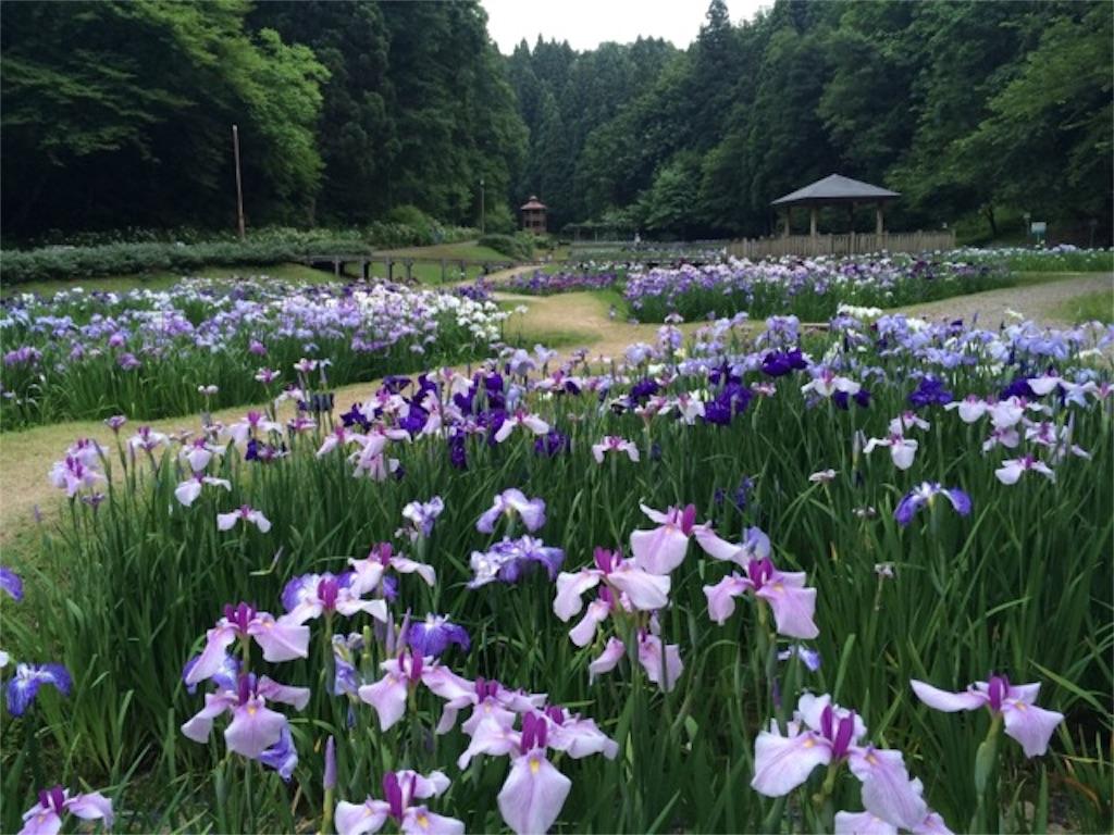 f:id:yururiururi:20160626093602j:image