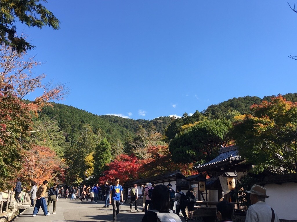f:id:yururiururi:20181116222604j:image
