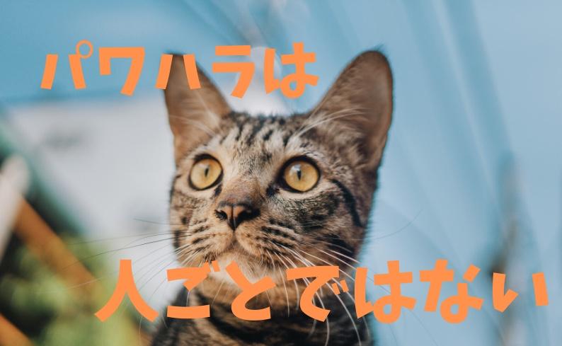 f:id:yusana7:20191029034122j:plain