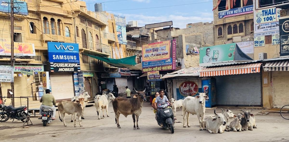街中にいる牛の大群の間をすり抜けるバイク