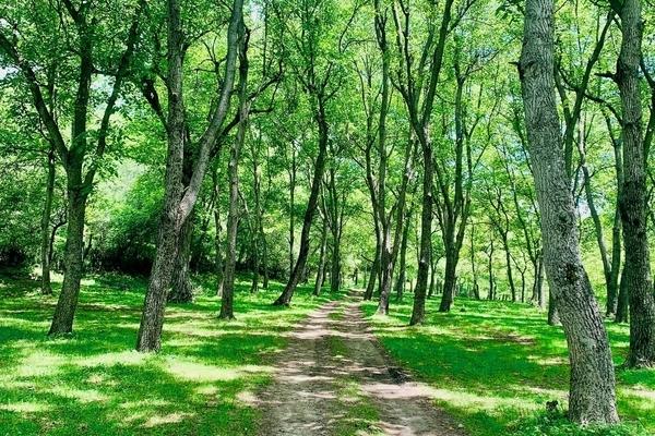 キルギスのアルスランボブ観光、くるみの森を散策