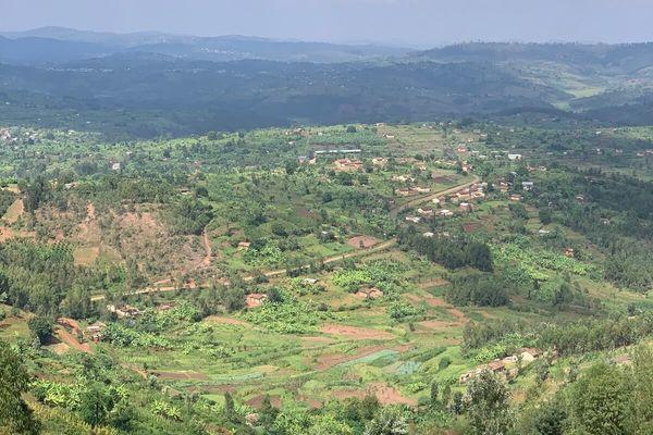 コーヒー農園からの景色