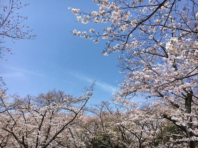 f:id:yusatoblog:20170407071500j:plain