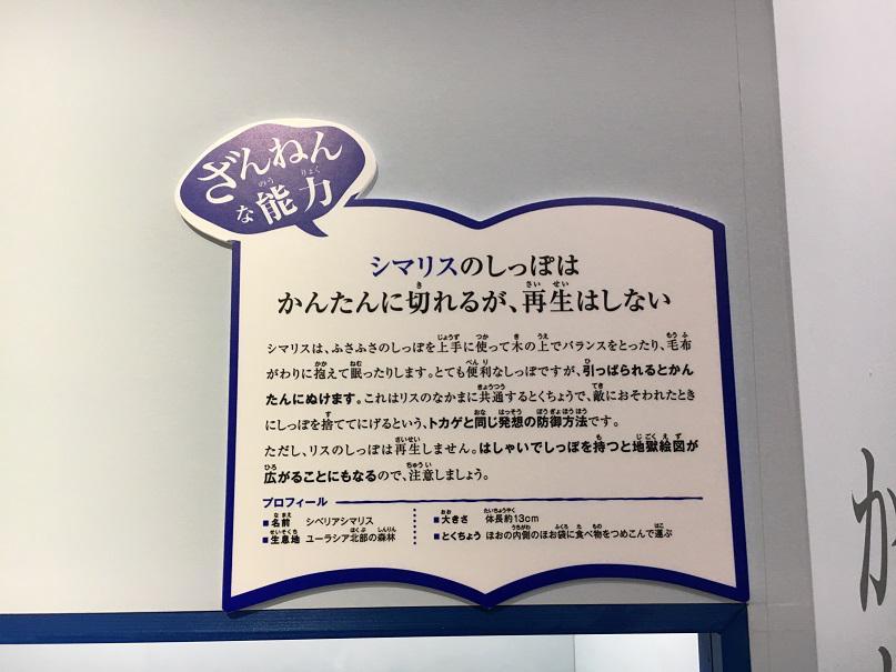 f:id:yusatoblog:20171111152118j:plain