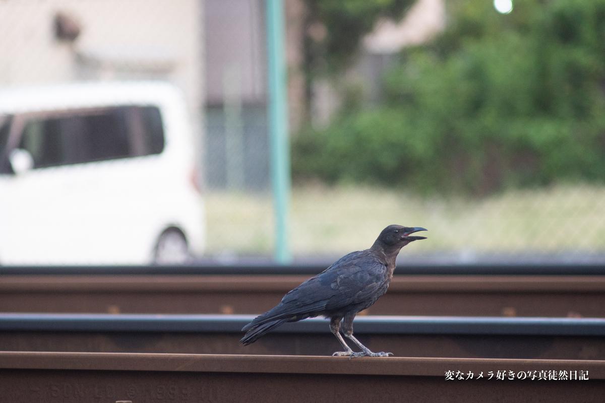 f:id:yuseiphotos:20190819212427j:plain