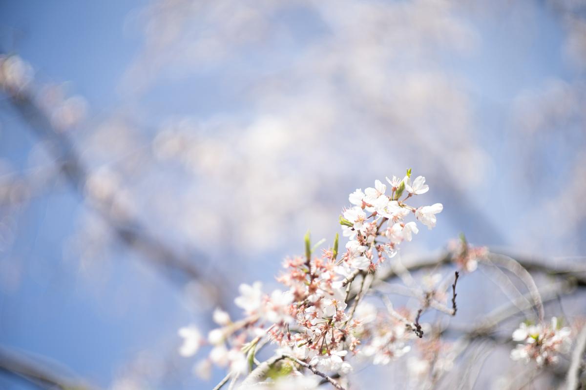 f:id:yuseiphotos:20200527144318j:plain