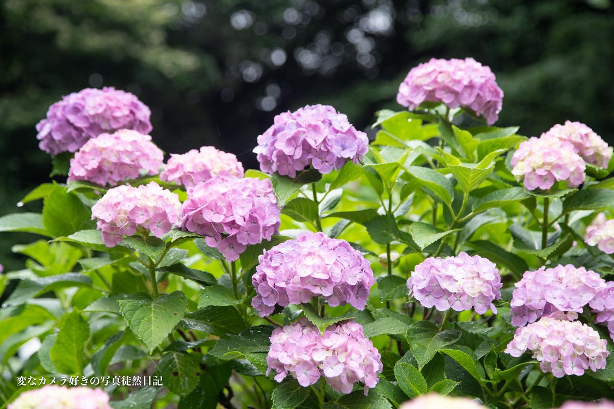 f:id:yuseiphotos:20200801064558j:plain