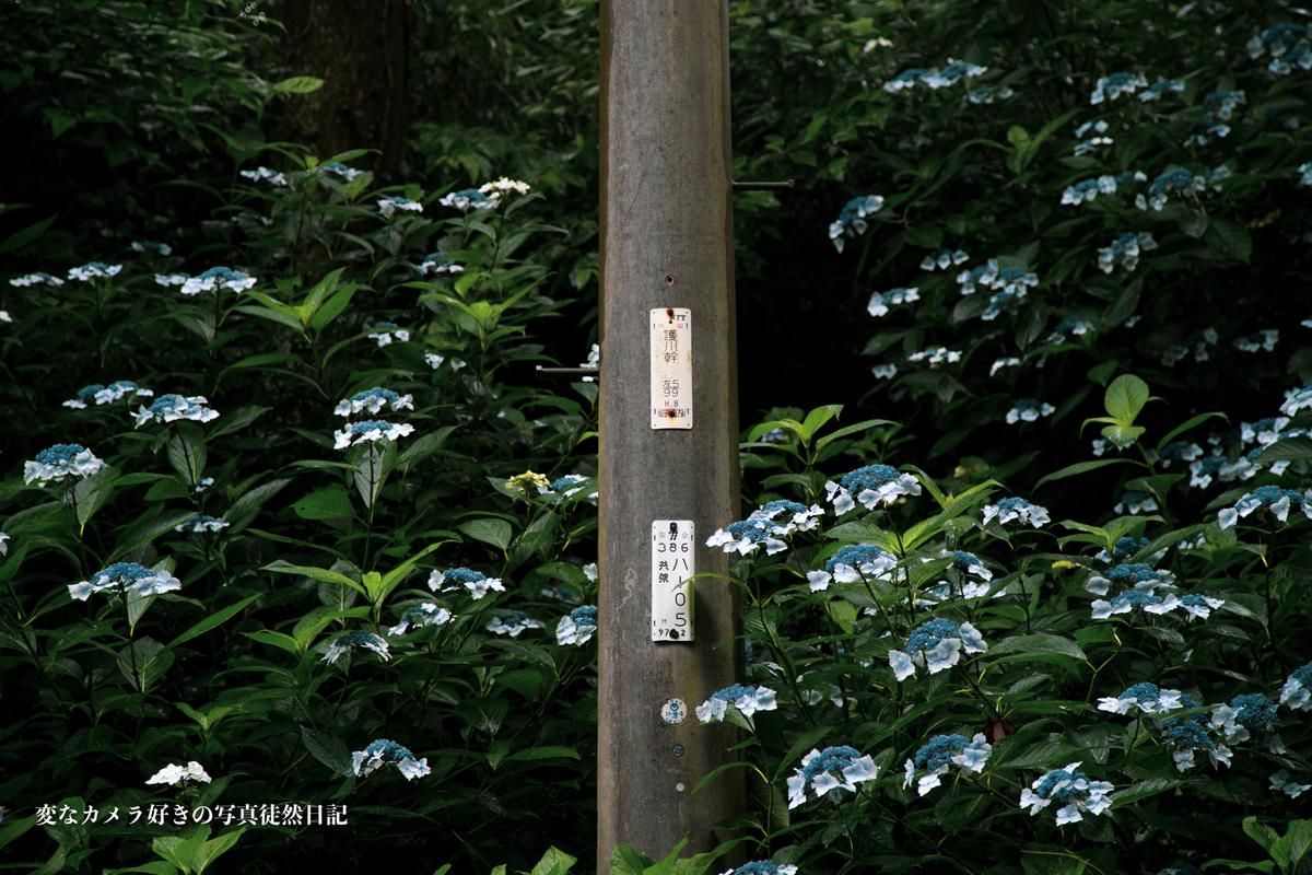 f:id:yuseiphotos:20200801064609j:plain