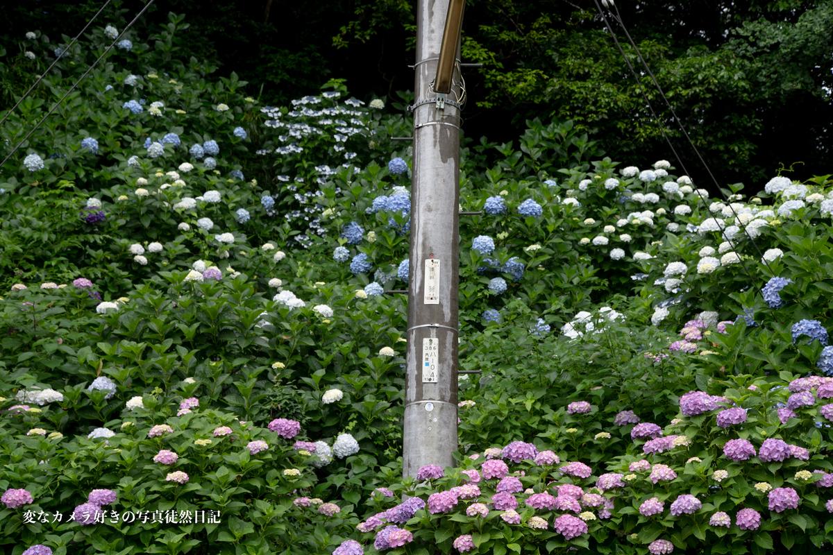 f:id:yuseiphotos:20200801064617j:plain