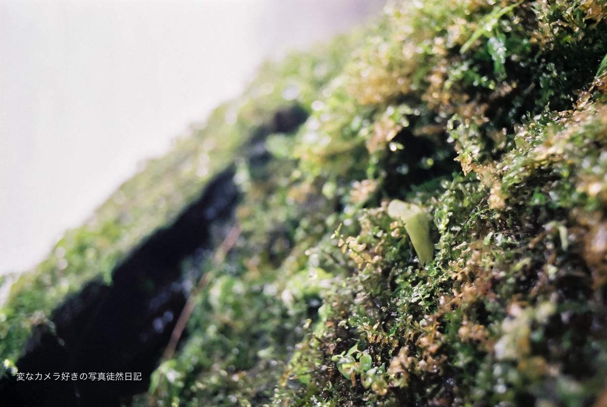 f:id:yuseiphotos:20200918002842j:plain