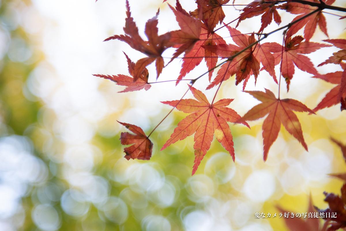f:id:yuseiphotos:20201119000511j:plain