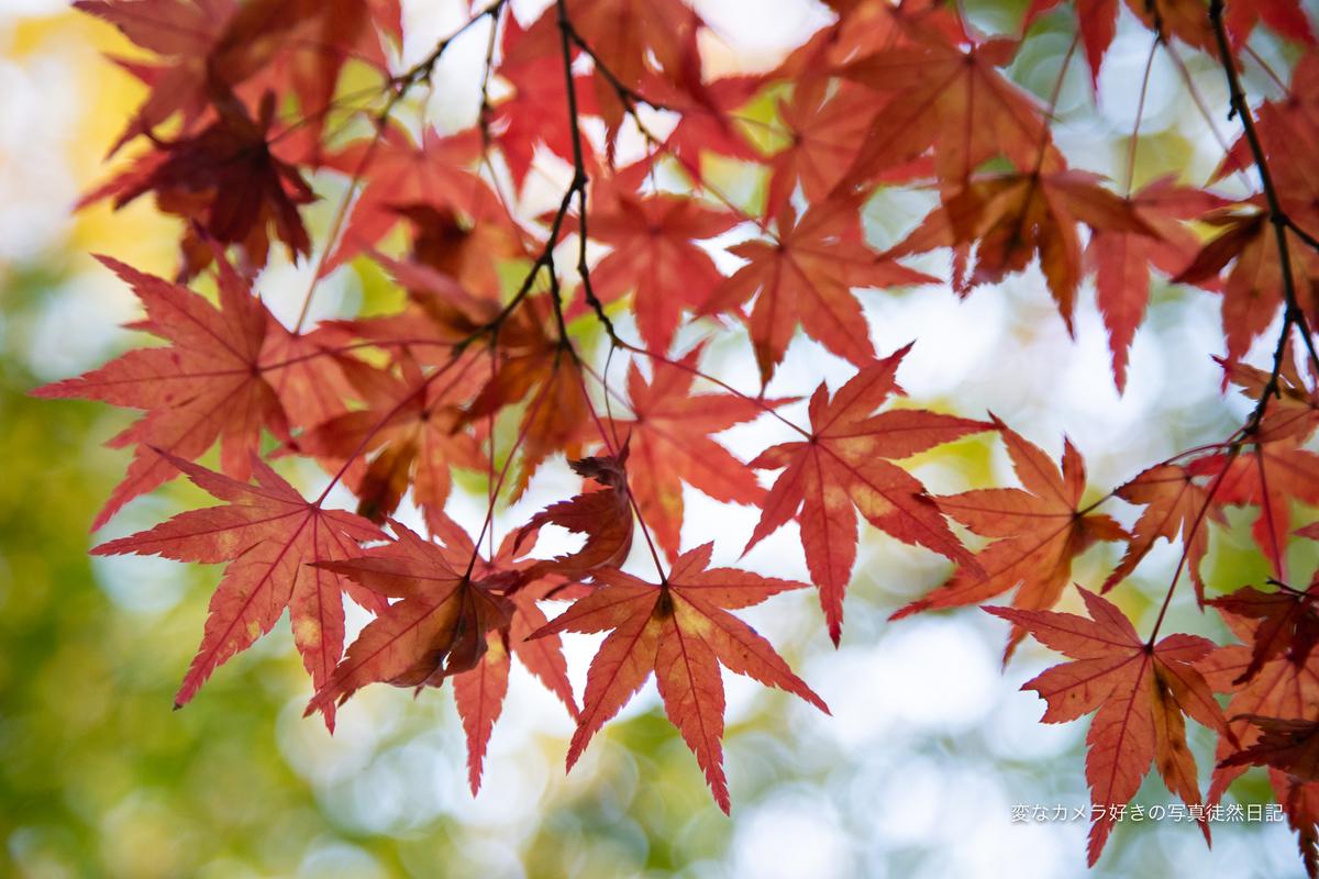 f:id:yuseiphotos:20201217223534j:plain