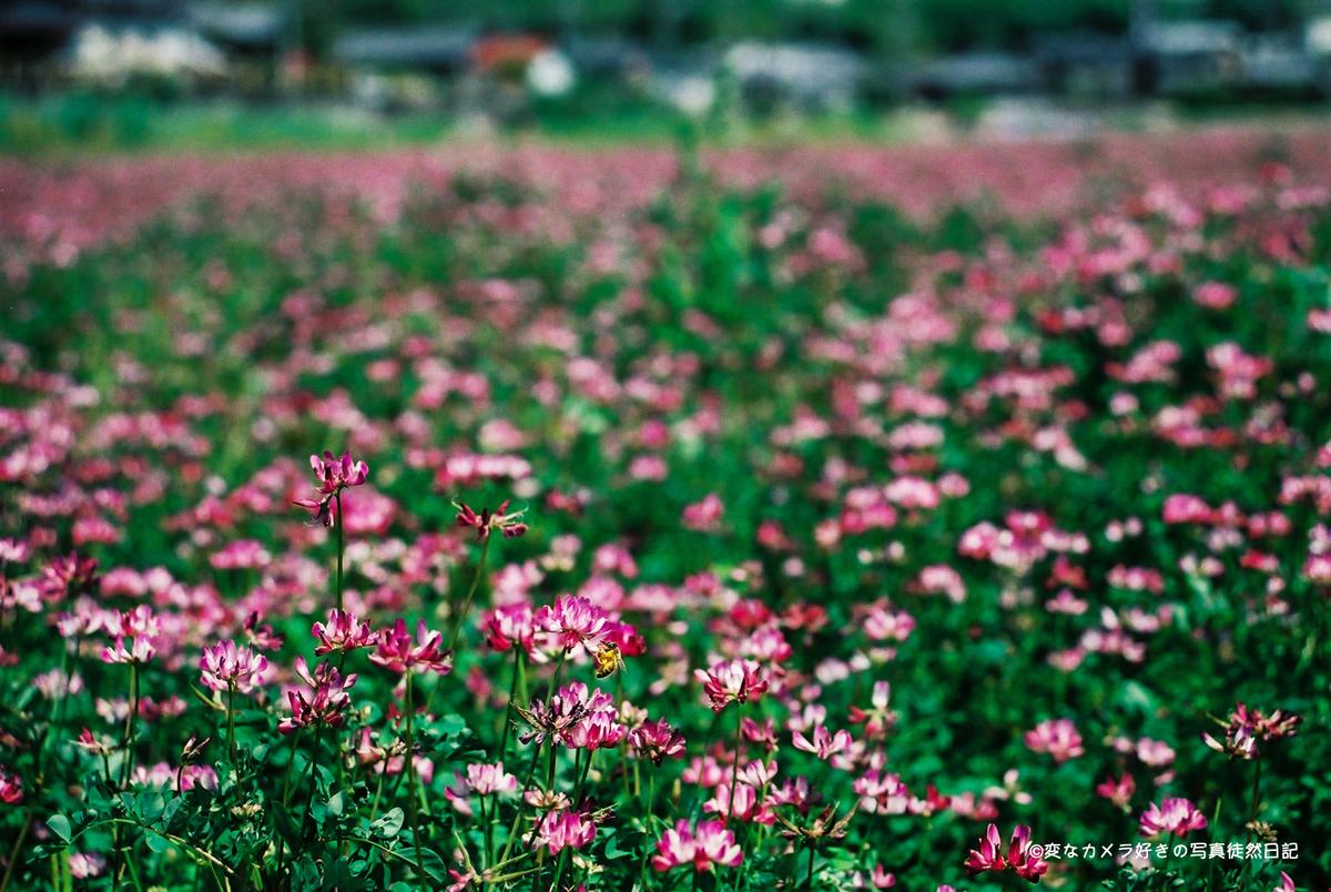 f:id:yuseiphotos:20210124185423j:plain