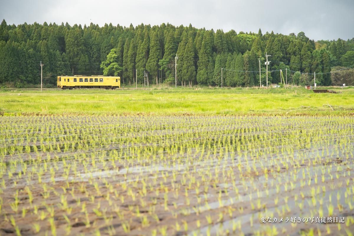 f:id:yuseiphotos:20210516124122j:plain
